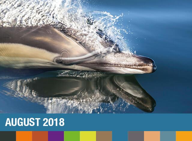 August 2018 | Staudigl-Druck Gewinnspiel