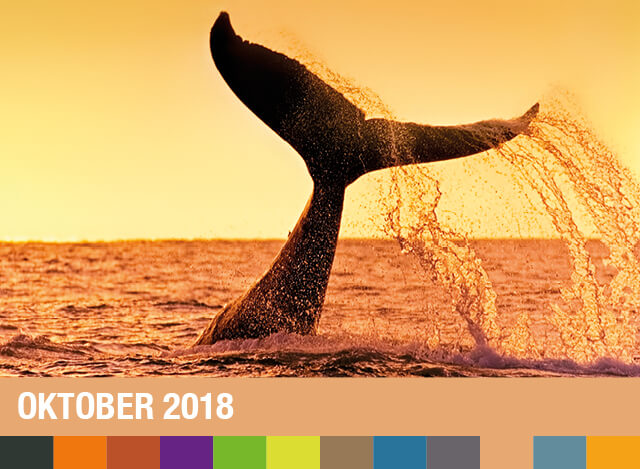 Oktober 2018 | Staudigl-Druck Gewinnspiel