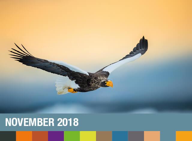 November 2018 | Staudigl-Druck Gewinnspiel
